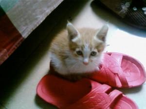《小猫小猫》