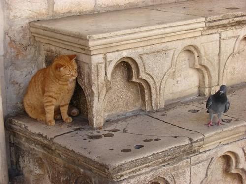 埋伏的小猫